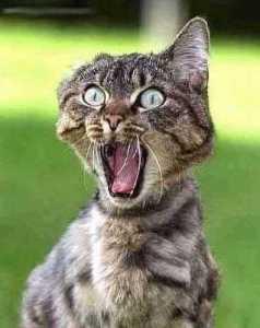 kat-schrikken